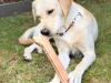 Barney (12 Monate alt) - G-Wurf