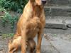 Keeper (10 Monate alt) - G-Wurf