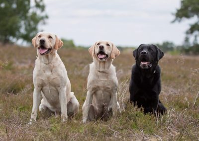 Lundy, Tarn & Wilson (Heide)