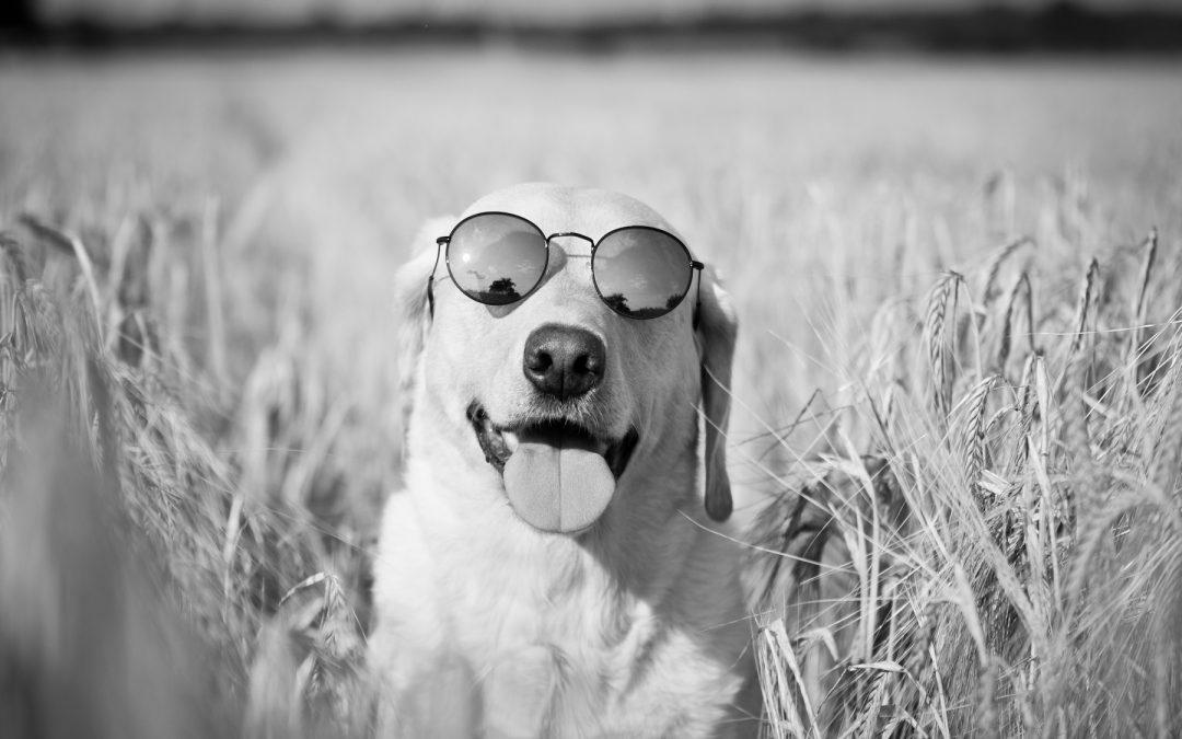 Der perfekte Hund?