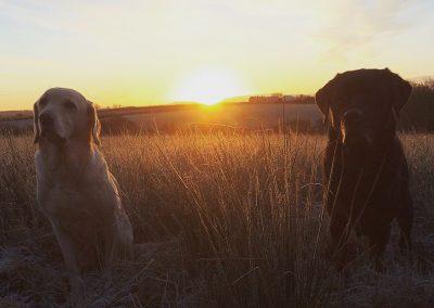 Letzter Morgengang