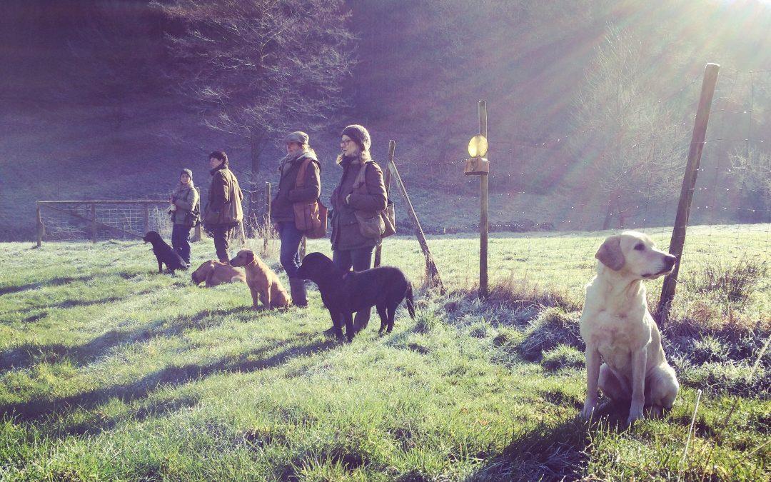 Irisches Training