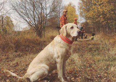 Tarn auf Jagd