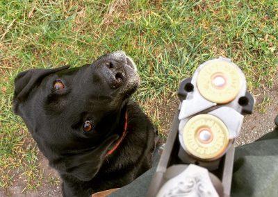 Wilson auf Jagd
